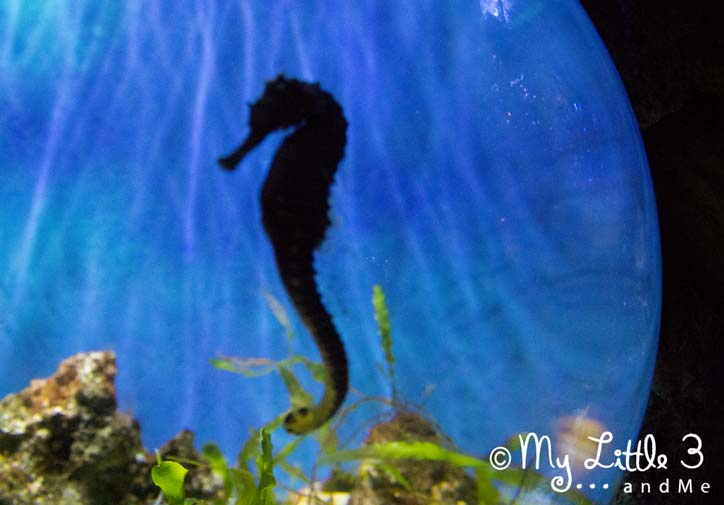 Seahorse-A review of our Blackpool holiday from My Little 3 and Me