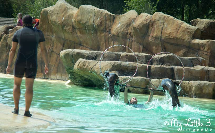 Sea Lion-Show-At-Blackpool-Beach- A review of our Blackpool holiday from My Little 3 and Me