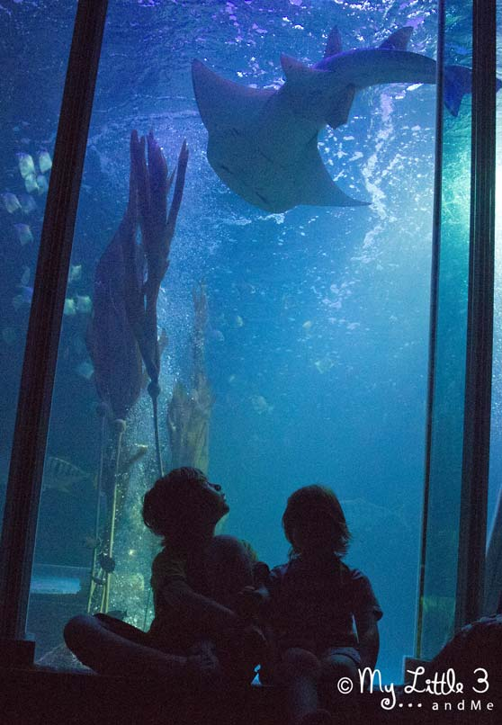 Sharks-At-The-Sealife-Centre-Blackpool-A review of our Blackpool holiday from My Little 3 and Me