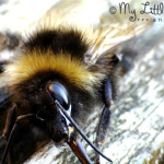 Learn About Bees' Tongues