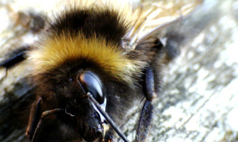 Learn about bees with My Little 3 and Me