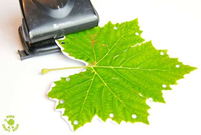Step 1 LEAF SEWING - A fun Autumn / Fall craft for kids. This Fall activity builds fine motor skills and connects kids with Nature using real leaves. An unusual leaf craft kids will love.
