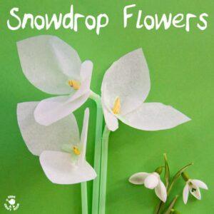 SNOWDROP FLOWERS - Snowdrop tissue paper flowers a simple winter craft and flower craft for kids. #kidscrafts #Winter #Snowdrops #flowercrafts #Wintercrafts #tissuepaper #tissuepapercrafts #flowercrafts #craftsforkids #wintercraftideas