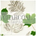 Get arty with leaves creating bold CHARCOAL LEAF PICTURES. Charcoal's a super medium to use for kids to explore leaf shape and texture.