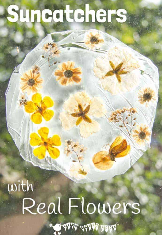 REAL FLOWER SUNCATCHERS - Here's a fun suncatcher flower craft for kids. This unusual method of preserving flowers gives them a gorgeous vintage look that's so pretty on the windows. #naturecrafts #suncatcher #suncatchercraft #suncatchers #flowercrafts #springcrafts #summercrafts #kidscrafts #craftsforkids #kidsactivities #kidscraftroom