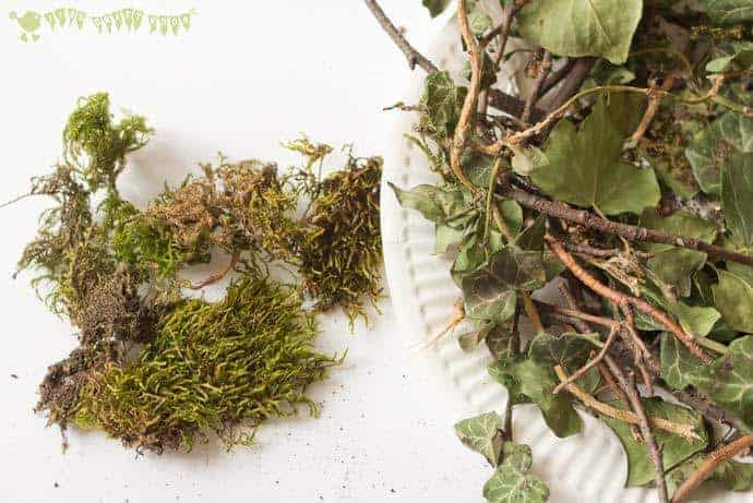 Collecting-moss-to-make-a-birds-nest-STEAM-project