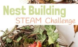 Make A Birds Nest STEAM Project
