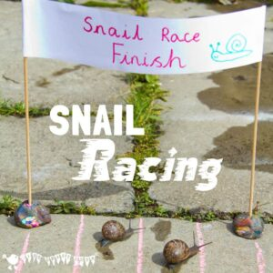 Learn Snail Facts by Snail Racing
