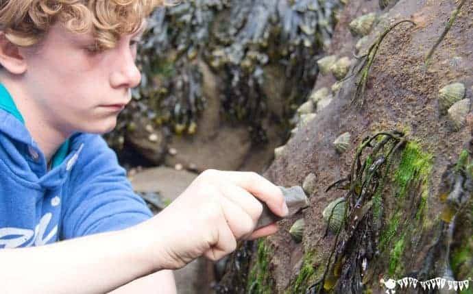 limpets-Coastal foraging is a fun survival skills for kids activity. Get kids outside and engaged with Nature finding & cooking their own seaside food for free.