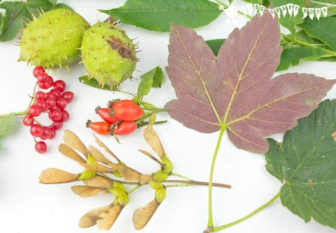 Choosing-Nature-Items-For-Autumn-Sensory-Play-Gel- Autumn Sensory Play Gel is an irresistible hands-on play idea bringing the wonders of Nature into a squishy, squashy textural delight kids LOVE to explore. Sensory play at its best!