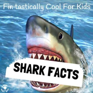 Cool Shark Facts Kids Will Love